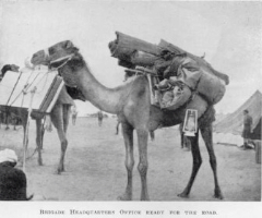 Camel laden with equipment