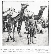 New Zealand soldiers with camels